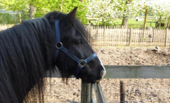 Paard Lotte
